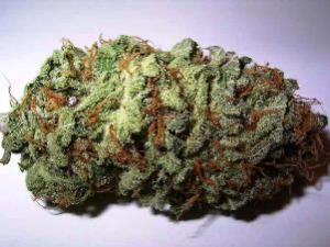 Order High Cannabidiol Strains Seeds For Sale