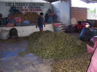 http://stopthedrugwar.com/files/leaves-drying-in-warehouse.jpg