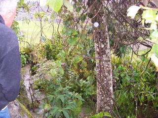 http://www.stopthedrugwar.org/files/stunted-coca-plant-in-garden.jpg